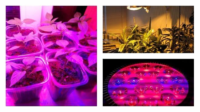 что собой представляет фитолампа для растений